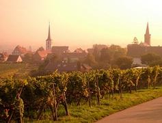Comment faire la route des vins d'Alsace ?