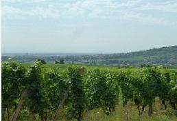 Que voir en Alsace du nord ?