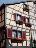 Comment avoir de beaux géraniums en Alsace ?
