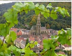Quel est le cépage le plus répandu d'Alsace ?