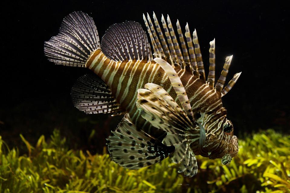 Halte au gaspillage de nourriture pour poissons