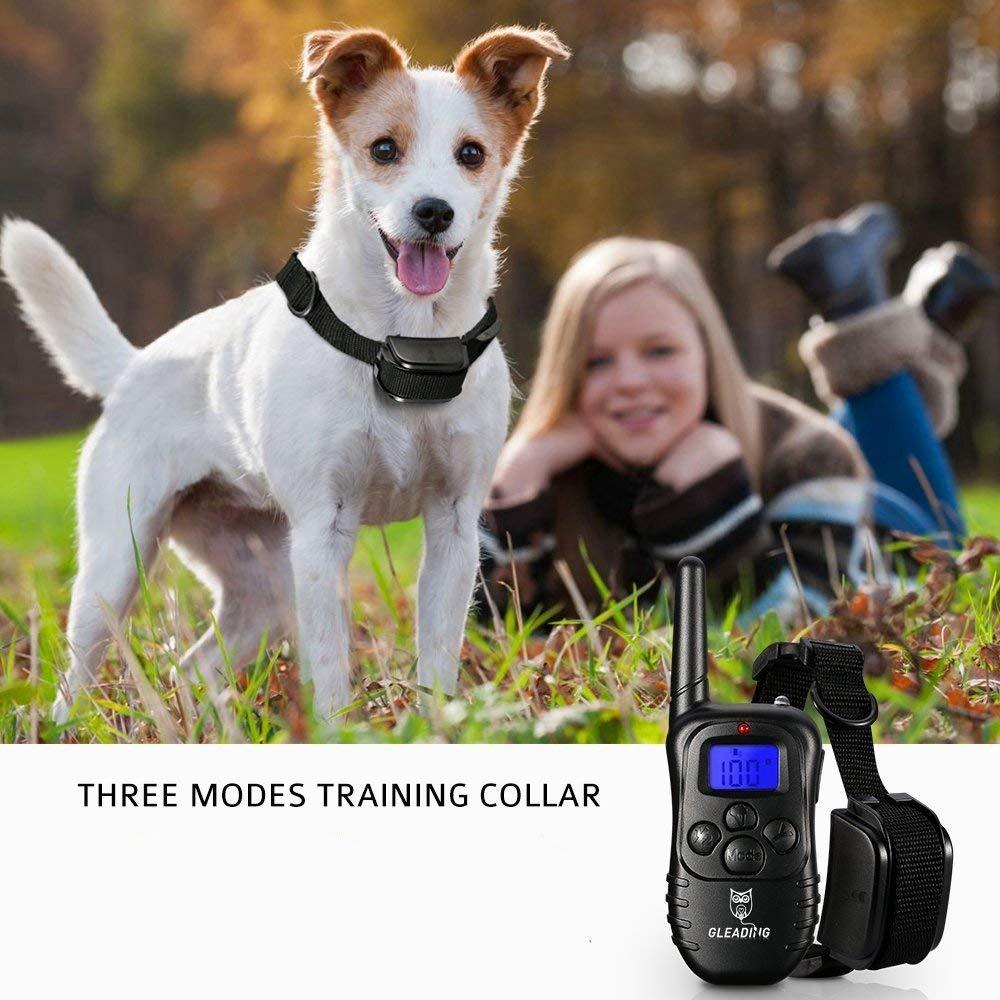 Tout savoir sur le collier GPS pour chien